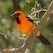 Aves de Percha - Photo (c) Mark Watson, algunos derechos reservados (CC BY-NC-ND)