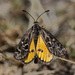 Golden Sunmoth - Photo (c) Leo, some rights reserved (CC BY-NC-SA)