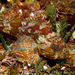 Southern Red Scorpionfish - Photo (c) Jean Roger, some rights reserved (CC BY-NC-ND)