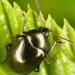 Brachypnoea - Photo (c) skitterbug, algunos derechos reservados (CC BY)