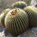 Cactus Family - Photo (c) reginasalinas, some rights reserved (CC BY-NC)
