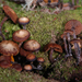 Kuehneromyces brunneoalbescens - Photo (c) Jerry, some rights reserved (CC BY), uploaded by Jerry Cooper