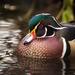Cisnes, Gansos, Patos Y Cercetas - Photo (c) Jason Headley, algunos derechos reservados (CC BY-NC)