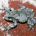 Cope's Gray Tree Frog - Photo (c) Patrick Coin, some rights reserved (CC BY-NC-SA)