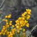 Senna pachyrrhiza - Photo (c) Andrea Talone, algunos derechos reservados (CC BY-NC)