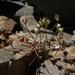 Androsace septentrionalis - Photo (c) Jim Morefield, algunos derechos reservados (CC BY)