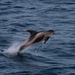 White-beaked Dolphin - Photo (c) Natural  England, some rights reserved (CC BY-NC-ND)
