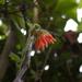 Nasa lambayequensis - Photo (c) then, algunos derechos reservados (CC BY-NC)