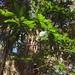 Sideroxylon - Photo (c) kmpetteruti, algunos derechos reservados (CC BY-NC)