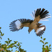 Mockingbirds and Thrashers - Photo (c) TexasEagle, some rights reserved (CC BY-NC)