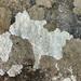 Pertusaria aspergilla - Photo (c) Heikel B., μερικά δικαιώματα διατηρούνται (CC BY-NC)