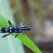Glenea elegans - Photo (c) anukma, μερικά δικαιώματα διατηρούνται (CC BY)