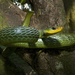 Cazadora Verde de Labios Amarillos - Photo (c) Josh Vandermeulen, algunos derechos reservados (CC BY-NC-ND)