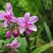 Orquídeas Terrestres - Photo (c) adrien, algunos derechos reservados (CC BY-NC-ND)