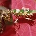 Hymenopodidae - Photo (c) Michael Jefferies, μερικά δικαιώματα διατηρούνται (CC BY-NC)