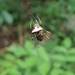 Verrucosa avilesae - Photo (c) Santi MD, algunos derechos reservados (CC BY-NC)