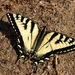 Mariposa Cometa - Photo (c) Francis Mariani, algunos derechos reservados (CC BY-NC-ND)
