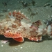 California Scorpionfish - Photo (c) Stefanie, some rights reserved (CC BY-NC)