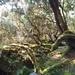 Rhododendron formosanum - Photo (c) 眼子菜,  זכויות יוצרים חלקיות (CC BY-NC)