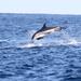 Delfín de Flancos Blancos - Photo (c) Mark Dennis, algunos derechos reservados (CC BY-NC)