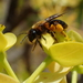 Zonandrena - Photo (c) Stefan, some rights reserved (CC BY-NC)
