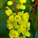 Berberidaceae - Photo (c) James Gaither,  זכויות יוצרים חלקיות (CC BY-NC-ND)