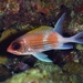 Squirrelfish - Photo (c) terence zahner, some rights reserved (CC BY-NC)