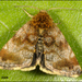 Small Yellow Underwing - Photo (c) Frans, some rights reserved (CC BY-NC-ND)