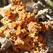 Dufourea turbinata - Photo (c) Barbara Schneider, μερικά δικαιώματα διατηρούνται (CC BY-NC-ND)