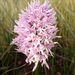 Naked-man Orchid - Photo (c) Roberto Sindaco, some rights reserved (CC BY-NC-SA)