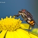 Rhiniidae - Photo (c) Marcello Consolo, μερικά δικαιώματα διατηρούνται (CC BY-NC-SA)