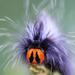 Mesocelis monticola - Photo (c) magriet b, algunos derechos reservados (CC BY-SA)