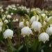 Copo de Nieve Primaveral - Photo (c) Anita, algunos derechos reservados (CC BY-NC-ND)