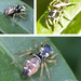 Sun Jumping Spiders - Photo (c) Roland Kratzer, some rights reserved (CC BY-NC-SA)
