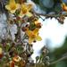 Pitón, Pitun, Wenaka, Wenawe, Apaí - Photo (c) Geoff Gallice, algunos derechos reservados (CC BY)
