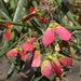 Flor de Mariposa - Photo (c) Gabriela F. Ruellan, algunos derechos reservados (CC BY-NC)