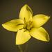 Sebaea exigua - Photo (c) Brendan Cole, alguns direitos reservados (CC BY-NC-ND)
