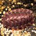 Tonicella - Photo (c) matt knoth, μερικά δικαιώματα διατηρούνται (CC BY-NC-ND)