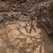 Eremias velox caucasia - Photo (c) DDohler, algunos derechos reservados (CC BY), uploaded by Derek Dohler