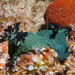 Miller's Nembrotha - Photo (c) 104623964081378888743, some rights reserved (CC BY-NC), uploaded by David R