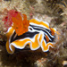 Magnificent Chromodoris - Photo (c) 104623964081378888743, some rights reserved (CC BY-NC), uploaded by David R