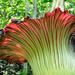 Aroideae - Photo (c) sumatran_trails, algunos derechos reservados (CC BY-NC-SA)