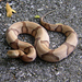 Southern Copperhead - Photo (c) Patrick Feller, some rights reserved (CC BY)