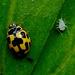 Propylea - Photo (c) Rosana Prada,  זכויות יוצרים חלקיות (CC BY)