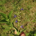 Salvia bogotensis - Photo (c) Mateo Hernandez Schmidt, some rights reserved (CC BY-NC-SA)