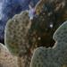 Echinopora - Photo (c) Ryan McMinds,  זכויות יוצרים חלקיות (CC BY)