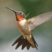 Ruby-throated Hummingbird - Photo (c) fiddleman, some rights reserved (CC BY-NC)