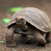 Tortoises - Photo (c) Aaron Logan, some rights reserved (CC BY)