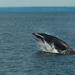 Ballenas, Delfines Y Parientes - Photo (c) Rene Ehrhardt, algunos derechos reservados (CC BY)