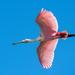 עופות - Photo (c) Gordon Leggett,  זכויות יוצרים חלקיות (CC BY-SA)